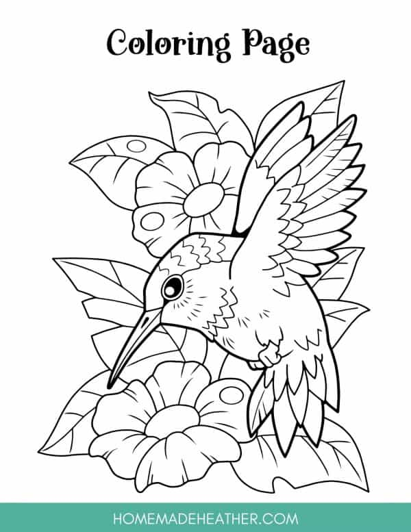 Flower Pollination Coloring Page