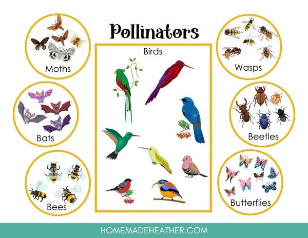Pollinators Printable