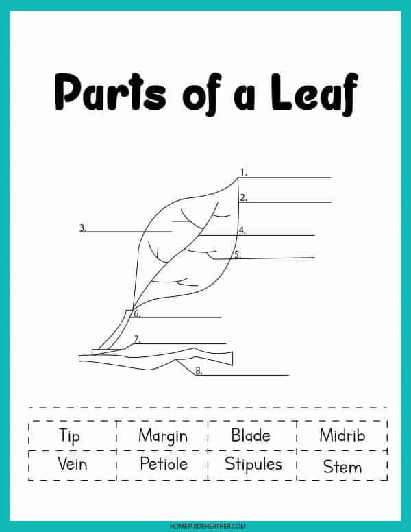 Parts of a Leaf Printable
