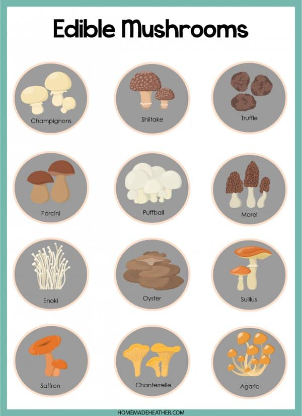 Edible Mushroom Printable
