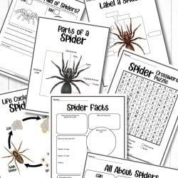Free Spider Activity Printables