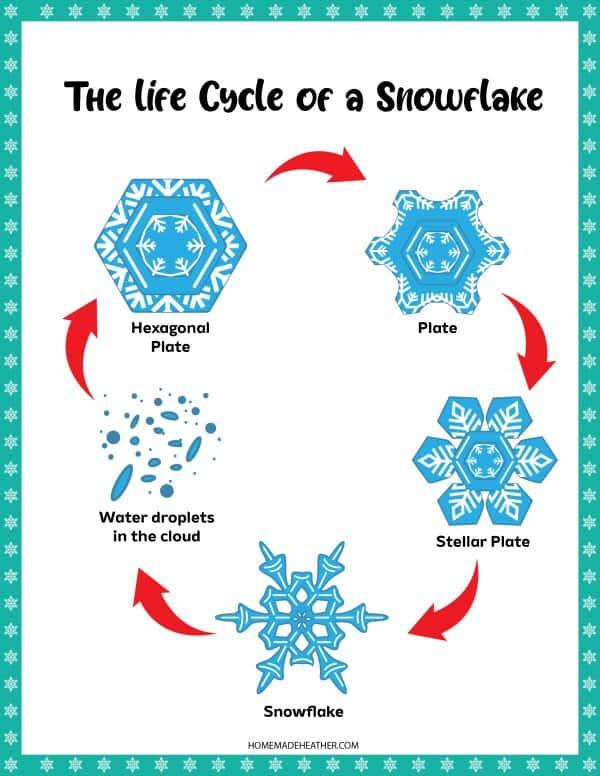 Snowflake Circle of Life