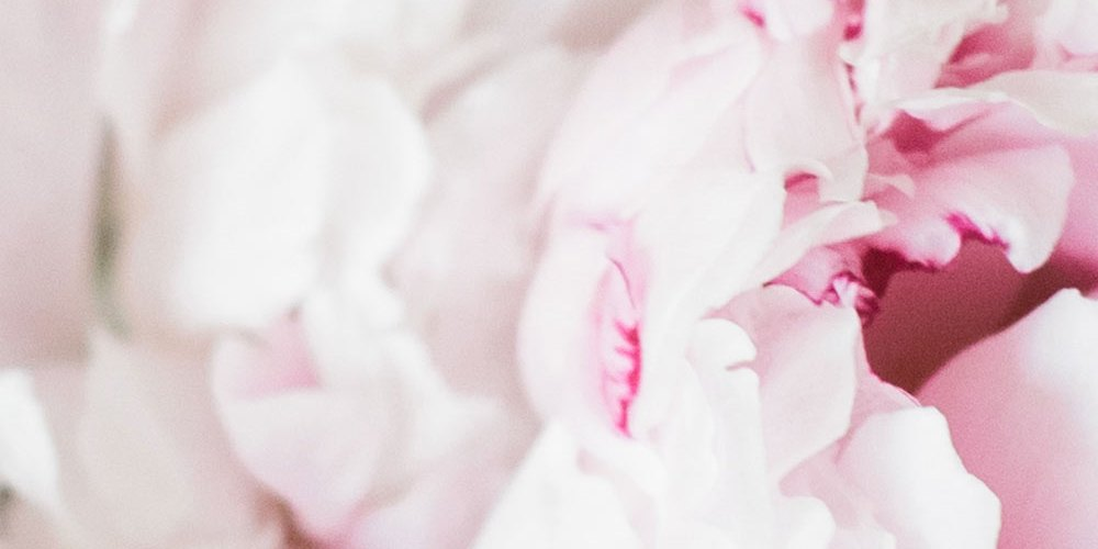 pink flowers up close