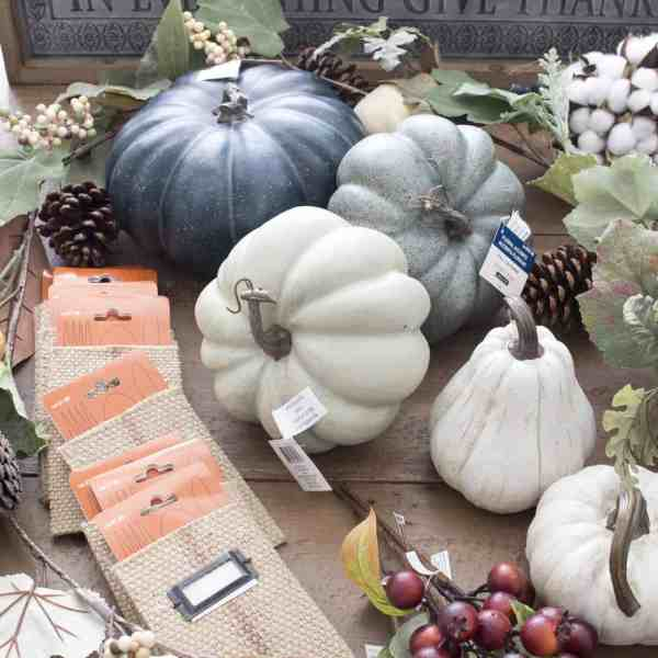 gourds and pumpkins for fall