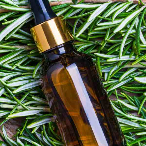 essential oil bottle in winter greens