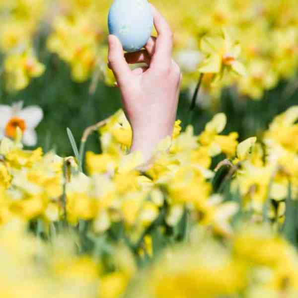 child holding up easter egg in field of daffodils