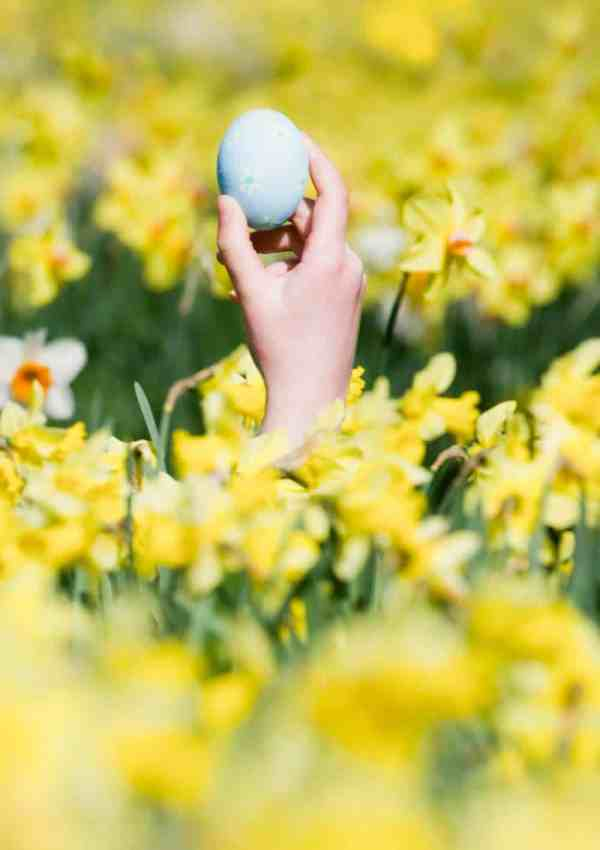 6 Tips for an Epic Family Easter Egg Hunt
