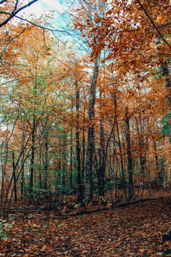 promenade en forêt automne