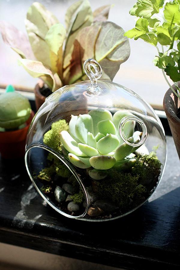 Growing Succulents Pots