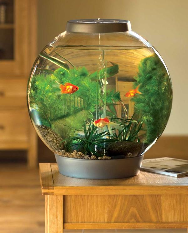 Small Round Aquarium Ideas