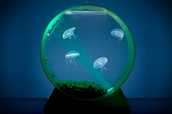 Small Round Aquarium Jellyfish