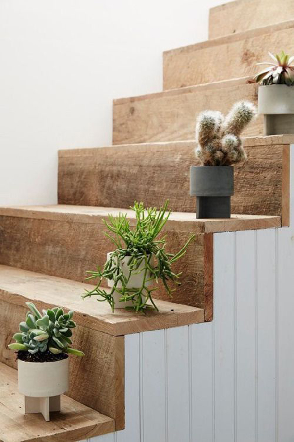 20 Simple Cactus Ideas For Beautify Your Room Home