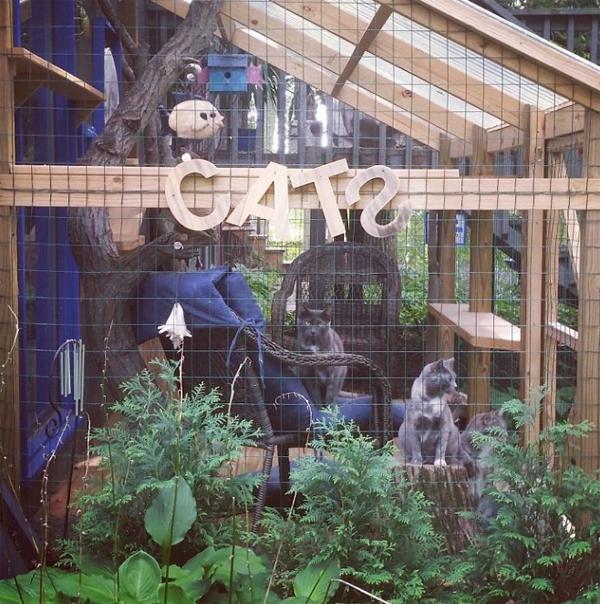 cat patio sign ideas homemydesign