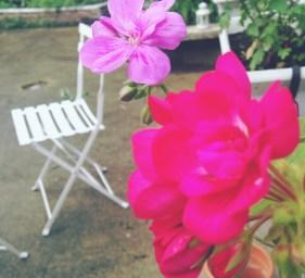 geranium rose chaise de jardin