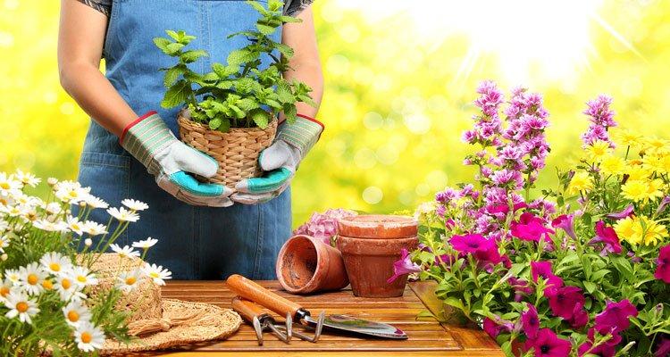 10.Maintain garden care