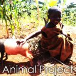 home of hope animal project pig goat cow rwanda kenya africa