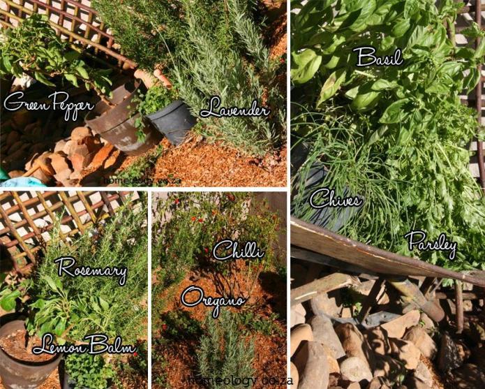 Herbs - watermarked