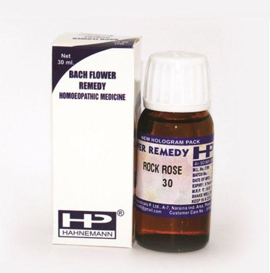 Buy Bach Flower Remedy Rock Rose for Frozen fear, terror.