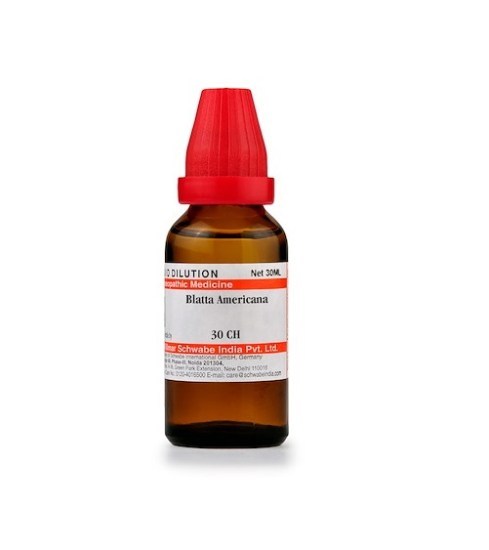 Schwabe Blatta Americana Homeopathy Dilution 6C, 30C, 200C, 1M, 10M