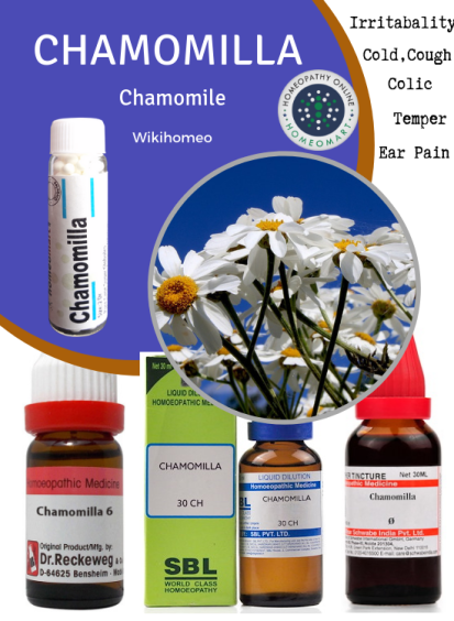 Chamomilla homeopathy medicine for irritability, ear pain, colic, temper tantrums, teething