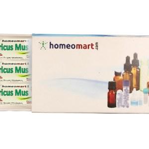 Agaricus Muscarius homeopathy pills
