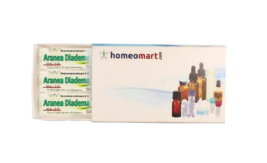 Aranea Diadema homeopathy pills