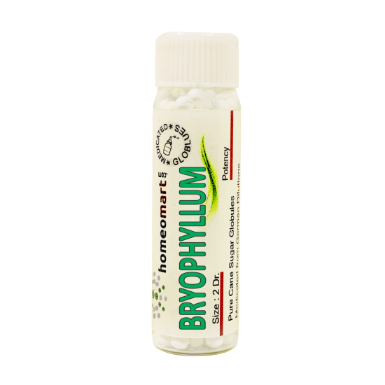Bryophyllum Calycinum Homeopathy 2 Dram Pellets 6C, 30C, 200C, 1M, 10M