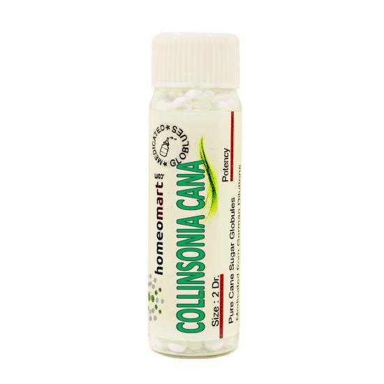 Collinsonia Canadensis Homeopathy 2 Dram Pellets 6C, 30C, 200C, 1M, 10M