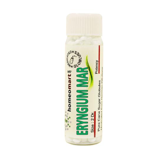 Eryngium Maritimum Homeopathy 2 Dram Pellets 6C, 30C, 200C, 1M, 10M