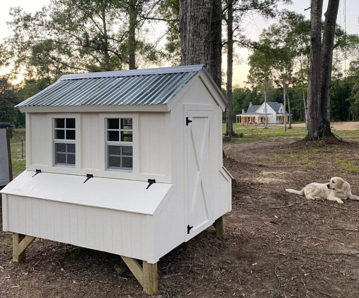 DIY Farmhouse chicken coop with labrador retriever