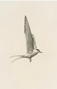 Juniper Print Shop Flight