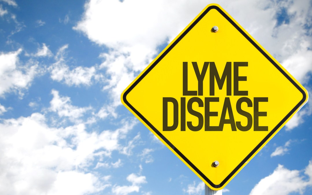 Homeopathy for the Dreaded Lyme Disease – Homeopathy for Mommies