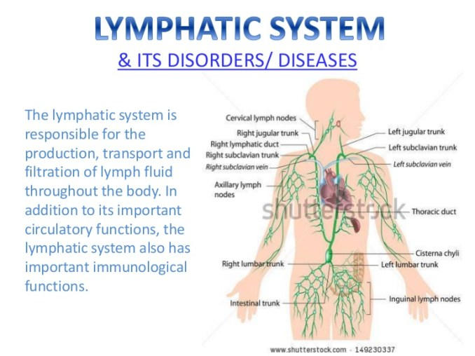 Electro Homeopathic Medicine for Lymphatic System