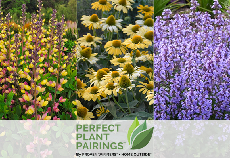 Home Outside Perfect Plant Pairings-home-image