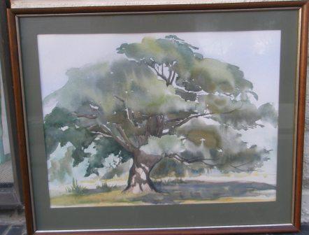 cabbage tree 005