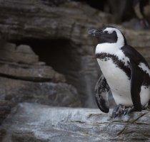 【SEO】スパムリンクに鉄槌を下した「ペンギンアップデート」ってなに?