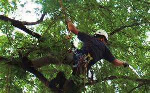 Pruning in a tree