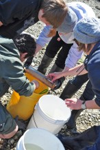PORT HADLOCK, Wash. - Eighth grade science students from Blue Heron Middle School and a specialist with the U.S. Geological Survey Marrowstone Marine Field Station measure a fish they caught and record the data as part of a hands-on marine science lesson. The students participated in an educational field trip to Naval Magazine Indian Island May 7-8 to learn how to conduct fisheries research work and help gather data that relates to the Kilisut Harbor restoration project. The hands-on project was led by personnel from U.S. Geological Survey's Marrowstone Marine Field Station, with support from personnel from National Oceanographic and Atmospheric Administration's National Marine Fisheries Service, U.S. Navy, Washington Department of Fish and Wildlife, and the North Olympic Salmon Coalition. (U.S. Navy photo by Liane Nakahara/Released)