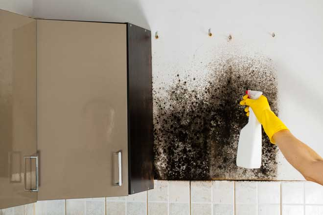Cleaning Mold in Kitchen