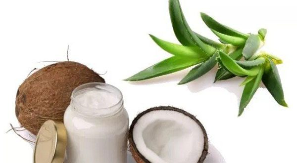 Aloe Vera gel with coconut oil sunburn remedy
