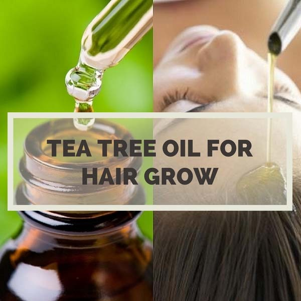 Tea Tree Oil For Hair Growth Long Hair With Tea Tree Oil
