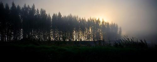 Maisemakuva: Aamun valoa II