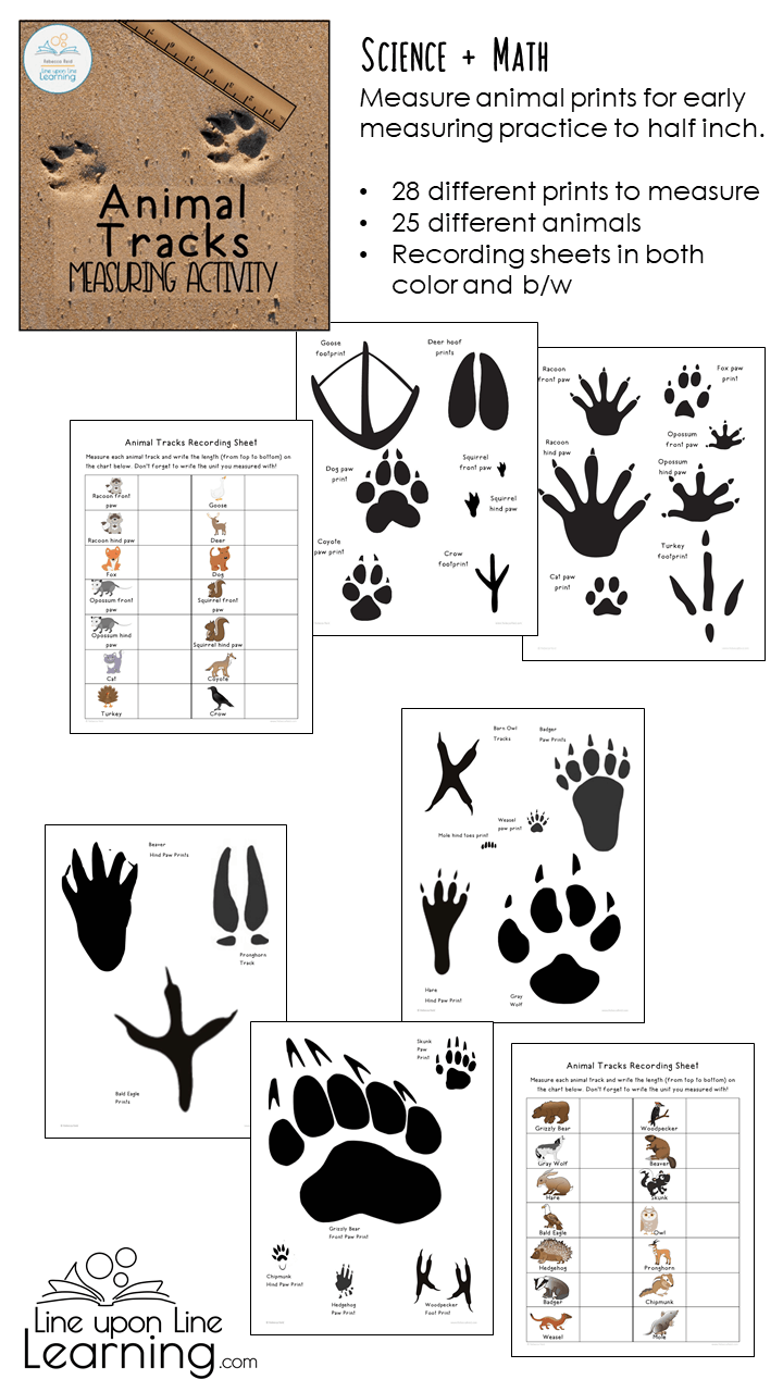 Animal Tracks Measuring Activity Line Upon Line Learning [ 1280 x 720 Pixel ]