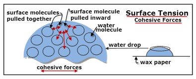 A portion of a water drop is magnified to show cohesive forces between water molecules.