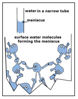 Capillary Action Cartoon Meniscus