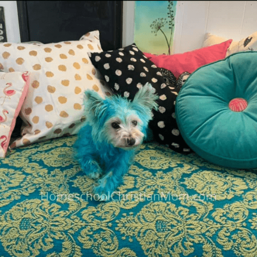 Picture of terrier dyed blue under the topic, homeschooling ideas for February
