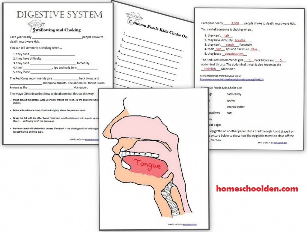 Digestive Worksheet