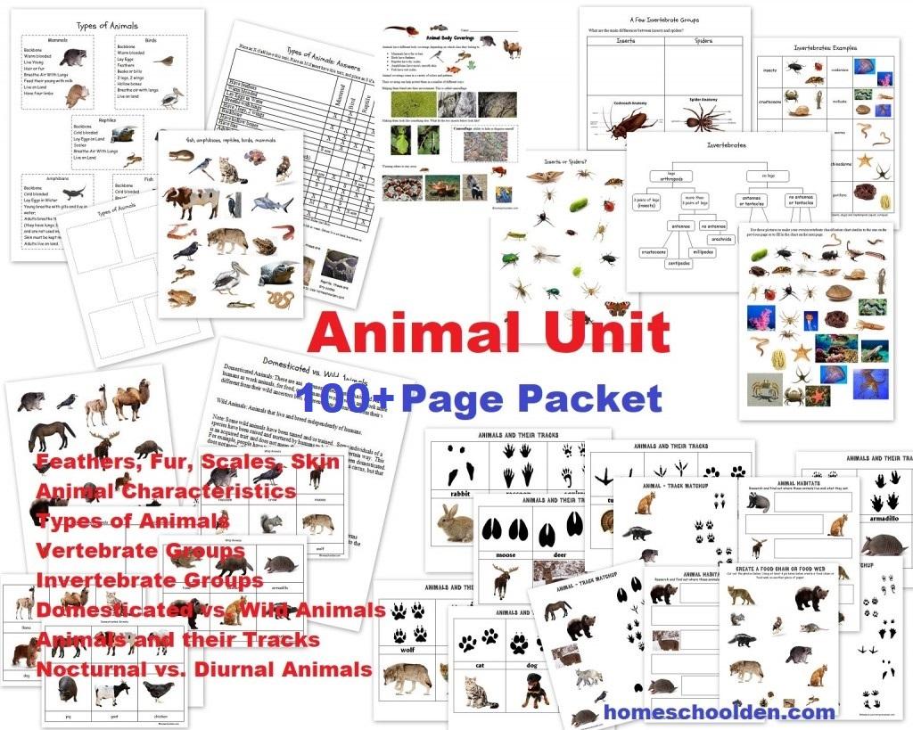 Animals Around The World Montessori 3 Part Cards