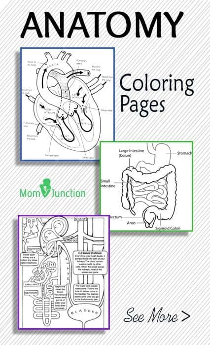 FREE Printable Anatomy Coloring Pages - Homeschool Giveaways