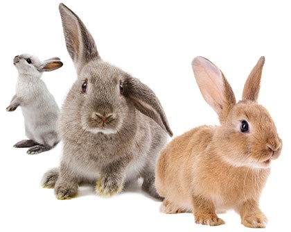 Bunnies: Cute and Cursed